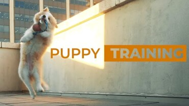 Positive Puppy Training – 11 Critical Exercises